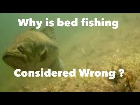 Why is bed fishing considered wrong? bed fishing explained!!